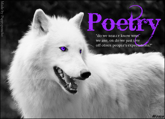 White Wolf With Purple Eyes Poetry - Main Wolf - P...